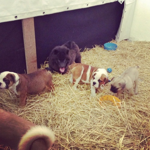 Pet Home, il padiglione dedicato agli animali domestici | Fiera del Levante 2014